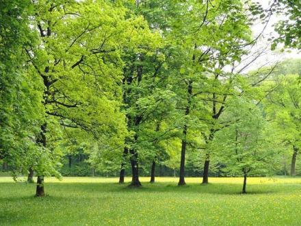 Залесяване Чирпан - БИ ЛЕС