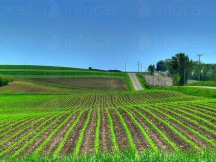 Зърнопроизводство в Елхово - Селскостопанска продукция Елхово