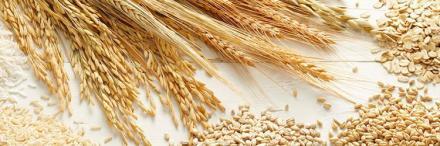 Зърнопроизводство в град Криводол  - ТПЗК Импулс