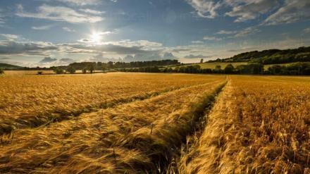 Зърнопроизводство в Нови Пазар - Агрострой ЕООД