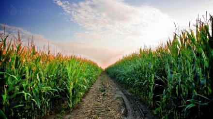 Земеделие в Кнежа-Плевен - Светлин Илчовски  ЕТ