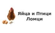 Яйца и Птици Ломци