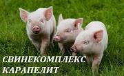 Свинекомплекс Карапелит