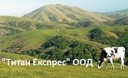 Титан Експрес ООД