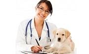 Ветеринар Ямбол