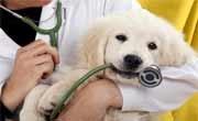 Ветеринар Разград