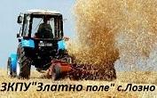 ЗКПУ Златно поле