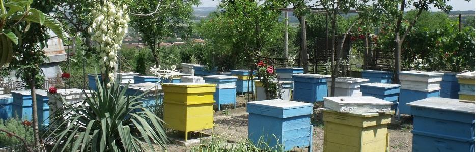 Пчеларска ферма Ради - Infocall.bg
