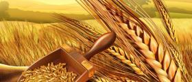 Производствена база за зърнени култури в Стражица