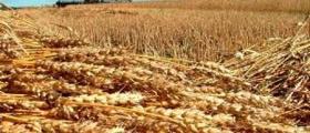 Производствена база за зърно и пилета в Тертер - Разград