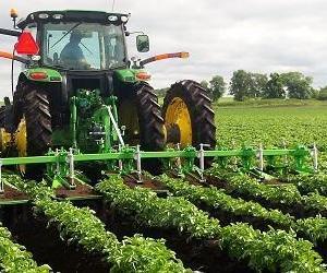 Продажба на картофи от базисни семена - холандски сорт Артемис в област Силистра