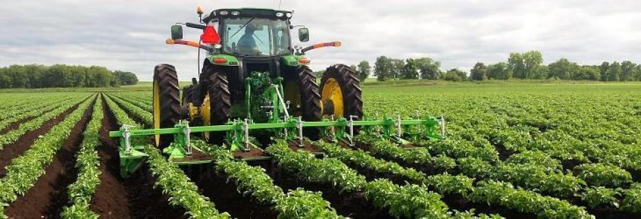 Продажба на картофи от базисни семена - холандски сорт Артемис в област Силистра - Infocall.bg