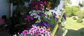 Балконски цветя в Стара Загора, Пловдив, Варна, Бургас, София