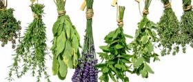 билки и билкови продукти в Бяла Слатина