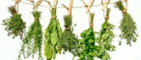 Билки и билкови продукти в Дупница