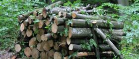 Дърва за огрев с отлично качество Ботевград