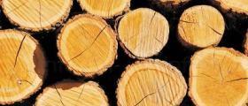 Дърва за огрев в Стара Загора