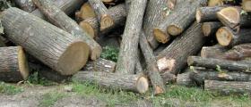 Дърва за огрев в Трън, Перник и София