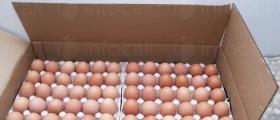 Яйца за консумация в Дончево-Добрич - Яйца и Птици Зора АД