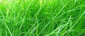 Качествени семена за озеленяване в Карнобат