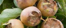 Овощни дръвчета в Обнова-Плевен