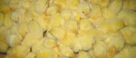 Пилета в Поликраище-Горна Оряховица-Велико Търново