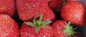 Посадъчен материал ягоди в Костенец и София