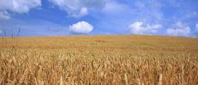 Селскостопанска продукция в област Габрово