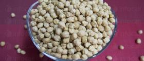 Семена от нахут в Дулово - БРЕВИС ЕООД