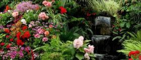 Семена за цветя в Козлодуй - Градински център Детелина