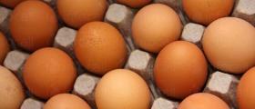Стокови яйца в Ловеч