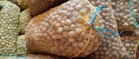 Wallnuts - SHOTI GROUP