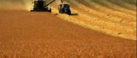 Зърнени култури в Свобода - Чирпан