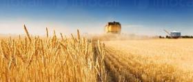 Зърнени култури в Търговище