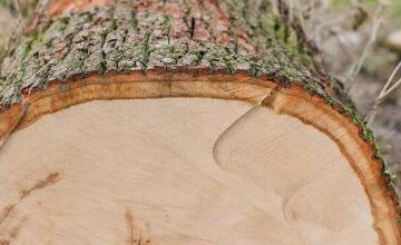 Дърва за огрев в Мадан и Смолян