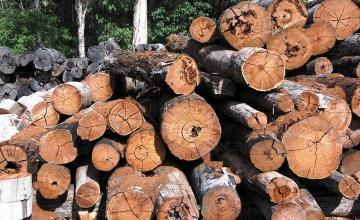 Дърва за огрев в Троян