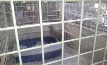 Хотел за котка, заек, порче/фретка цени в София - Ветеринарна клиника София
