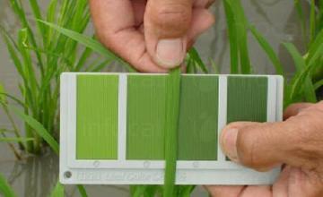 Качествени торове за листно подхранване в Карнобат