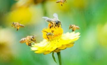 Лекарства за пчели в София-Банишора