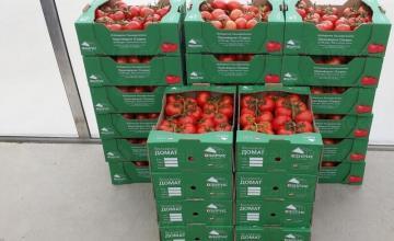 Оранжерийни домати в град Мездра - Озирис Цветан Йорданов ЕТ