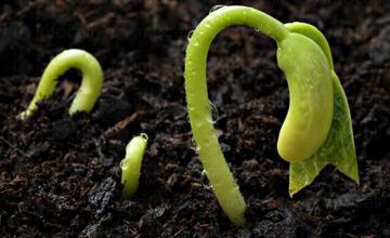 Препарати растителна защита Плевен