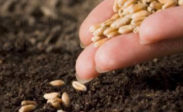 Препарати, торове и семена в Брестовец-Плевен