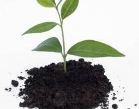Препарати за растителна защита в Карнобат
