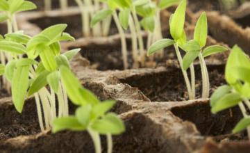 Препарати за растителна защита в Свищов