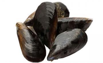 Пресни морски деликатеси в Бургас
