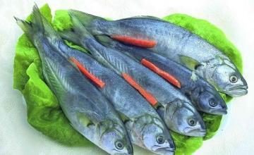 Пресни риби в град Бургас