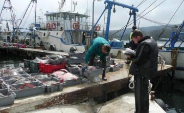 Прясна черноморска риба във Варна