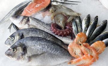 Продажба на риба и рибни продукти на едро във Варна