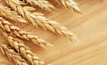 Пшеница в Трън, Перник и София