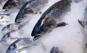 Риба и замразена стока Плевен